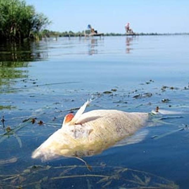 Черкащині загрожує екологічна катастрофа