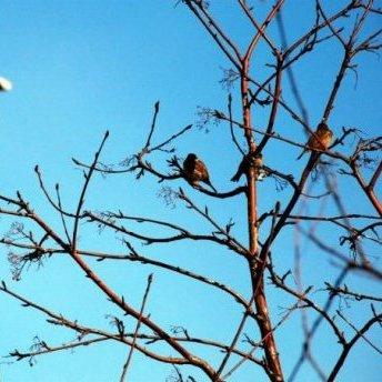 Завтра в Україну прийде справжня весна