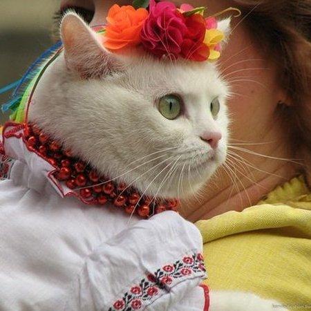 Україна потрапила до топ-10 країн з найбільшою кількістю котів