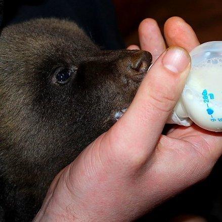 У харківському зоопарку народилися ведмежата (фото)