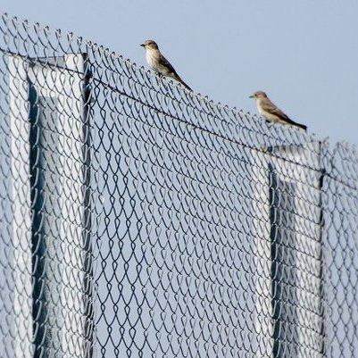 Латвія почала будувати паркан на кордоні з Росією