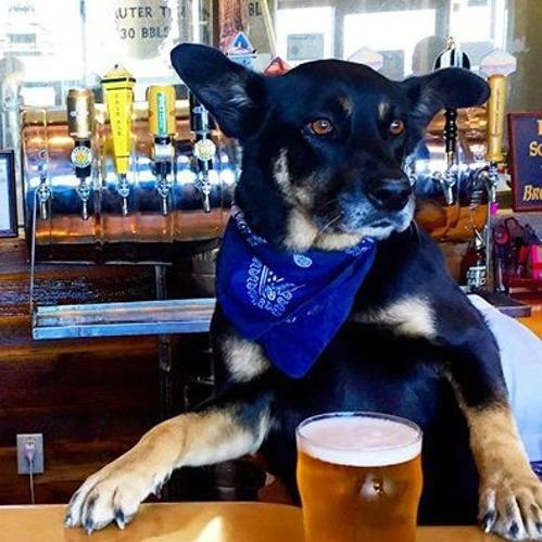 У США незабаром відкриється кафе з собаками