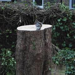 Не рубайте дерева: фото білки, яка втратила свою домівку