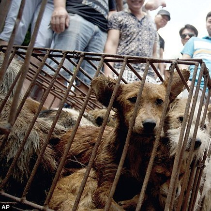 В Китаї пройшов жорстокий фестиваль собачого м'яса (ФОТО 18+)