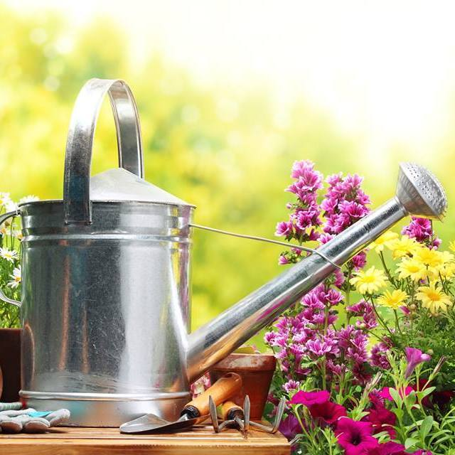 Завтра у Києві відбудеться міський ярмарок з продажу товарів для садівників та городників