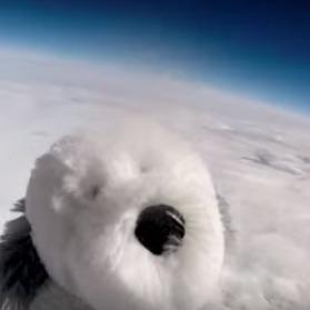 Британські школярі відправили м'яку іграшку в космос (відео)