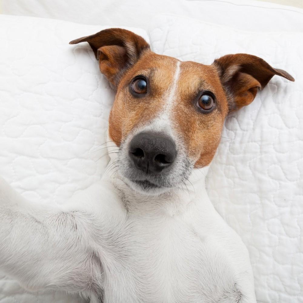 Собак навчили викладати селфі в соцмережі