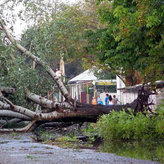 У Тбілісі ураган вириває з коренем дерева та обриває дроти