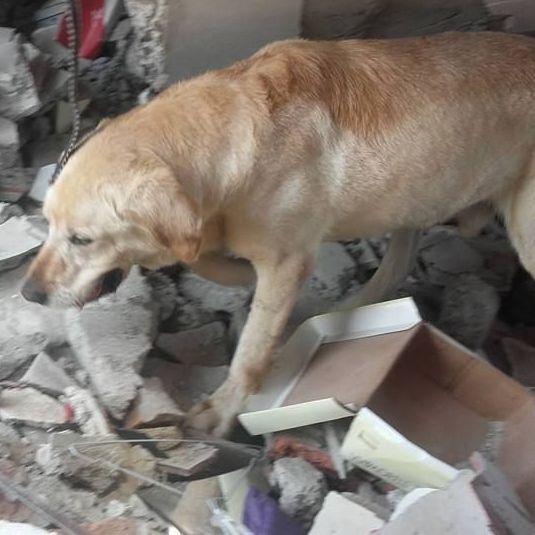 В Еквадорі поховали собаку, який витяг 7 осіб з-під завалів