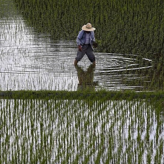 В Японії вирішили замінити фермерів роботами