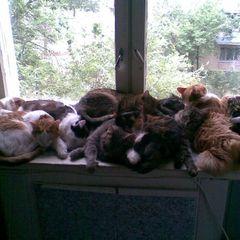 У Росії у родини боржників забрали 34 кішки