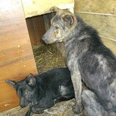 У московському притулку для тварин знайшли трупи десятків померлих від голоду собак та котів