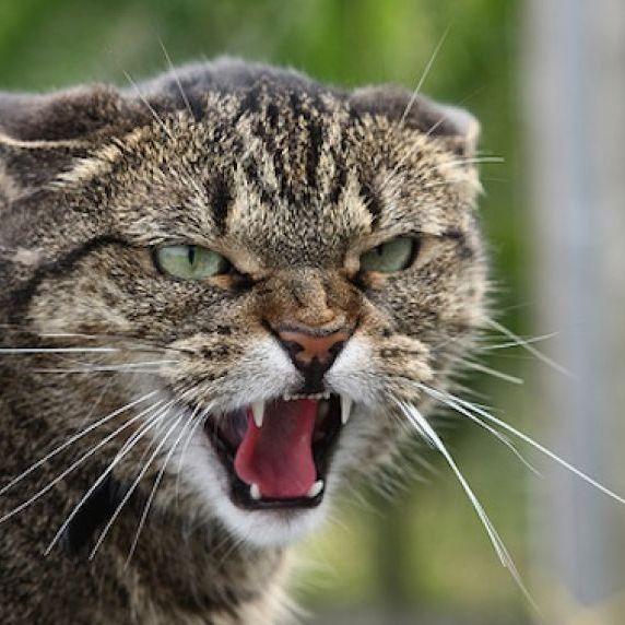 У Новосибірську для заспокоєння кота викликали ОМОН