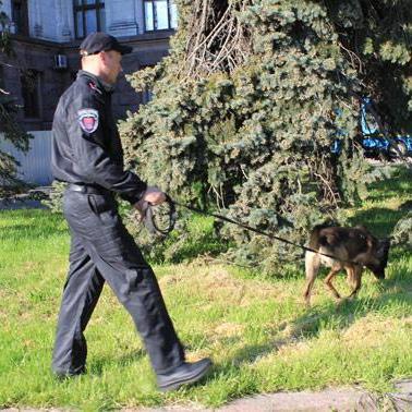 В Одесі на Куликовому полі шукають вибухівку