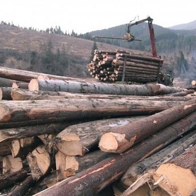 Міністр екології вражений масштабами вирубки лісів на Прикарпатті