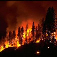 Лісові пожежі в Канаді стали причиною евакуації 80 000 людей