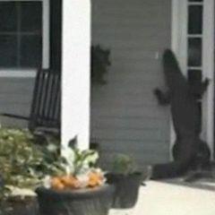 У Південній Кароліні алігатор постукав у двері будинку (відео)