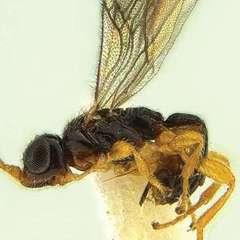 На честь Бреда Пітта назвали новий вид комах
