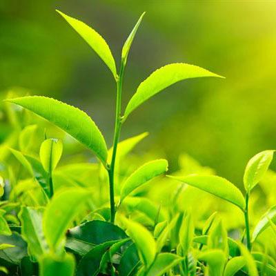 Британські вчені підрахували кількість видів рослин на Землі