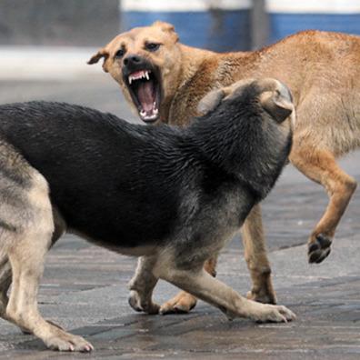 У Миколаєві безпритульні пси відгризли жінці руку