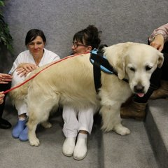У кращому госпіталі Італії тепер лікують пацієнтів за допомогою тварин