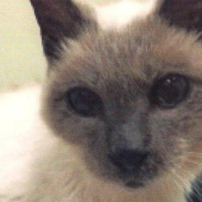 Як виглядає найстаріший у світі кіт (фото)