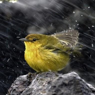 Укргідрометцентр оголосив штормове попередження