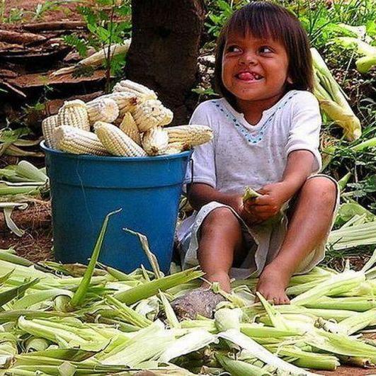 Людство врятує кукурудза-мутант, - вчені