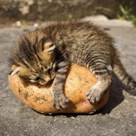 Вчені знову радять відмовитися від картоплі. Але не зовсім.
