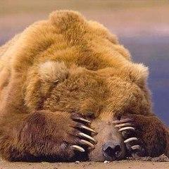 На Вкраїну милу: польський ведмідь втік у Карпати