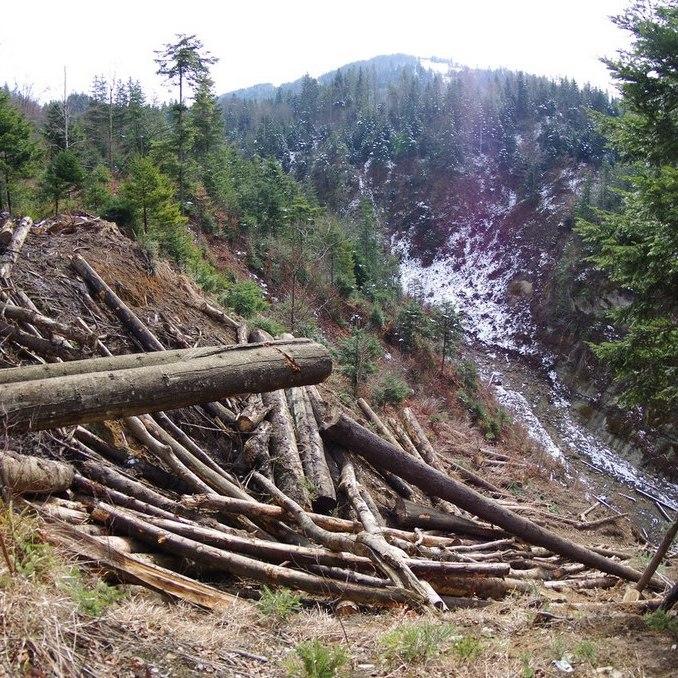 Мінекології заборонило санітарну вирубку дерев у заповідниках та природних парках