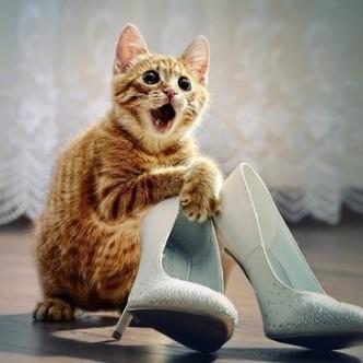 1100 котів запросили на канадське весілля