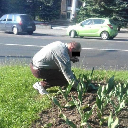 Патрульні поліцейські змусили чоловіка посадити назад вирвані ним тюльпани