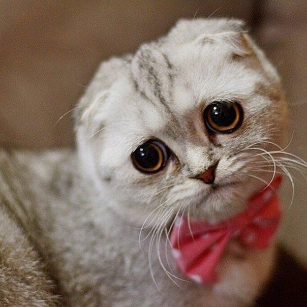Більше ніяких селфі з котиками на території Саудівської Аравії