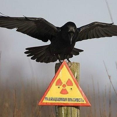 Чорнобиль зменшує розмір мозку у тварин, - американські вчені