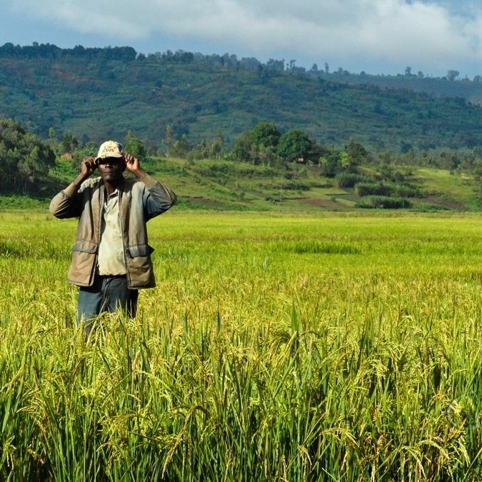ПАР відбере землю у білих фермерів