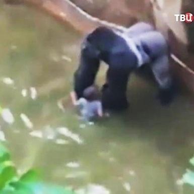 Директор зоопарку розповів про причини розстрілу горили, до якої потрапила дитина