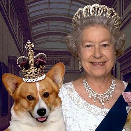 Песики англійської королеви отримають власну лінію аксесуарів