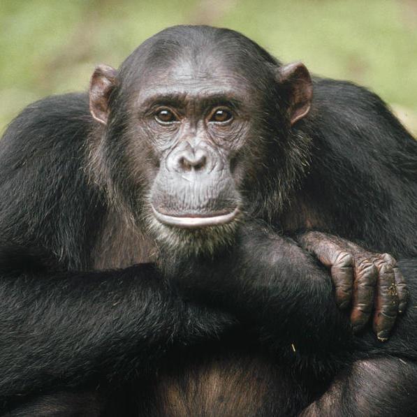 В Індії мавпа обікрала ювелірний магазин (відео)