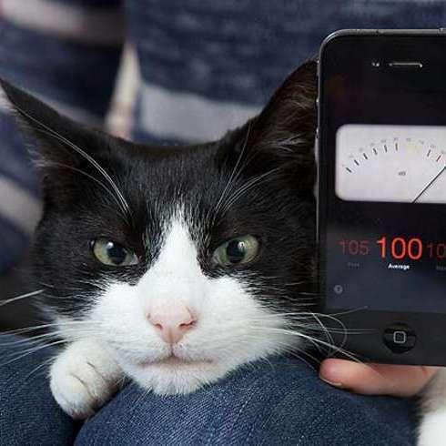 Наймуркотливіший кіт побив світовий рекорд (ВІДЕО)