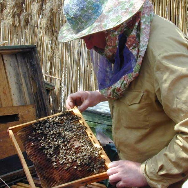 На Львівщині бджоли зажалили пасічника насмерть