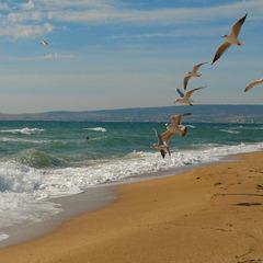 Євпаторійський пляж закатають в асфальт (ВІДЕО)
