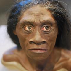 Вчені знайшли предків індонезійських «хобітів»