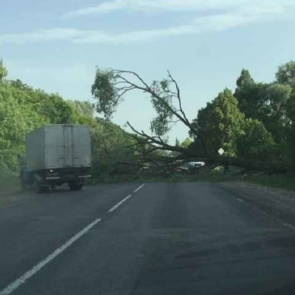 Трасу Ковель-Луцьк заблокувало дерево