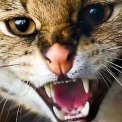 Укус скаженого кота став смертельним для жінки з Рівненщини