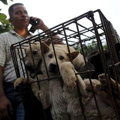 Голлівудські зірки закликали заборонити фестиваль з поїдання собак і кішок у Китаї