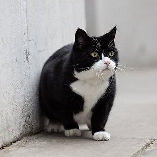 Кіт британського МЗС пробрався в резиденцію прем'єра (відео)