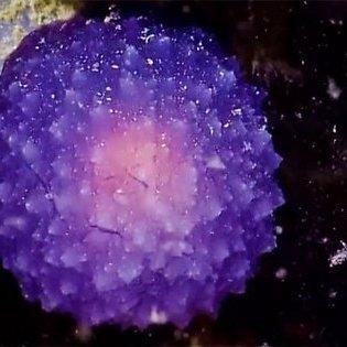На дні Тихого океану знайдена загадкова пурпурна куля (відео)