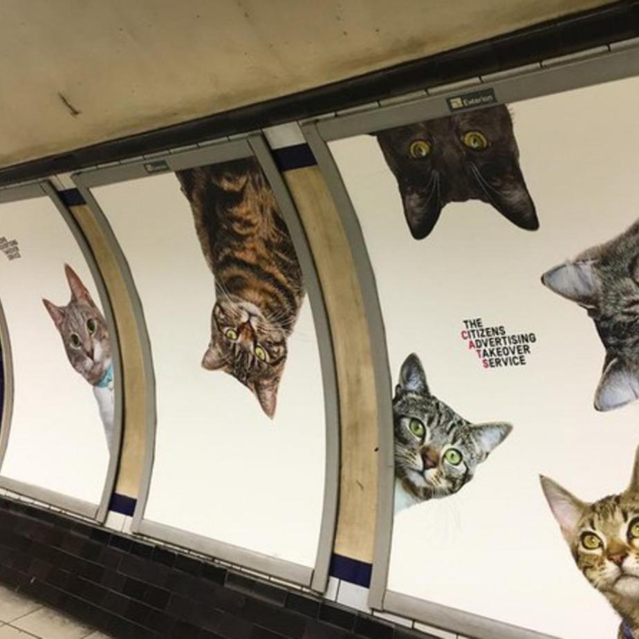 У Лондоні коти заполонили метро (фото)