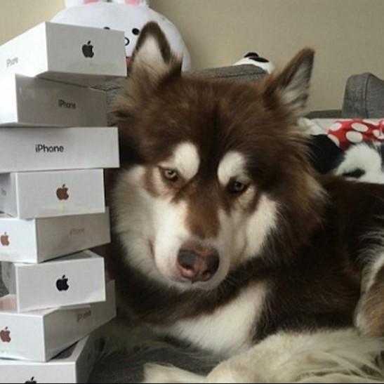 Син найбагатшого китайця купив своєму собаці вісім iPhone 7